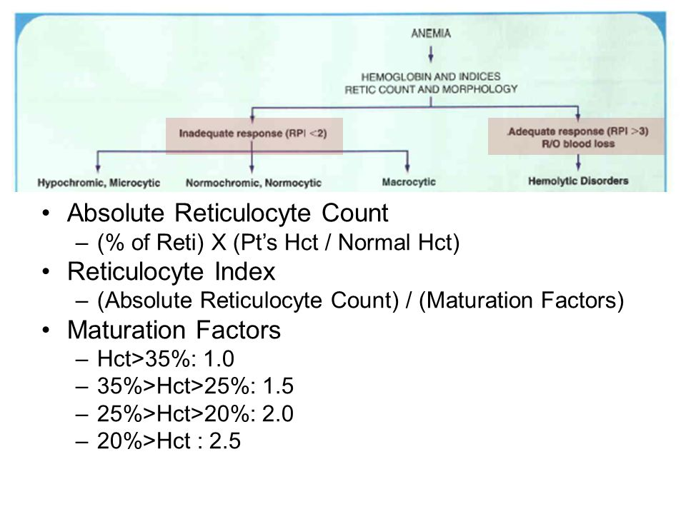 Absolute Reticulocyte Count –(% of Reti) X (Pt's Hct / Normal Hct) Reticulocyte Index –(Absolute Reticulocyte Count) / (Maturation Factors) Maturation Factors –Hct>35%: 1.0 –35%>Hct>25%: 1.5 –25%>Hct>20%: 2.0 –20%>Hct : 2.5