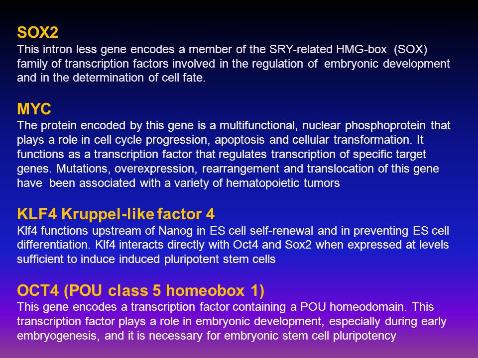 SOX2 This intron less gene encodes a member of the SRY-related HMG-box (SOX) family of transcription factors involved in the regulation of embryonic development and in the determination of cell fate.