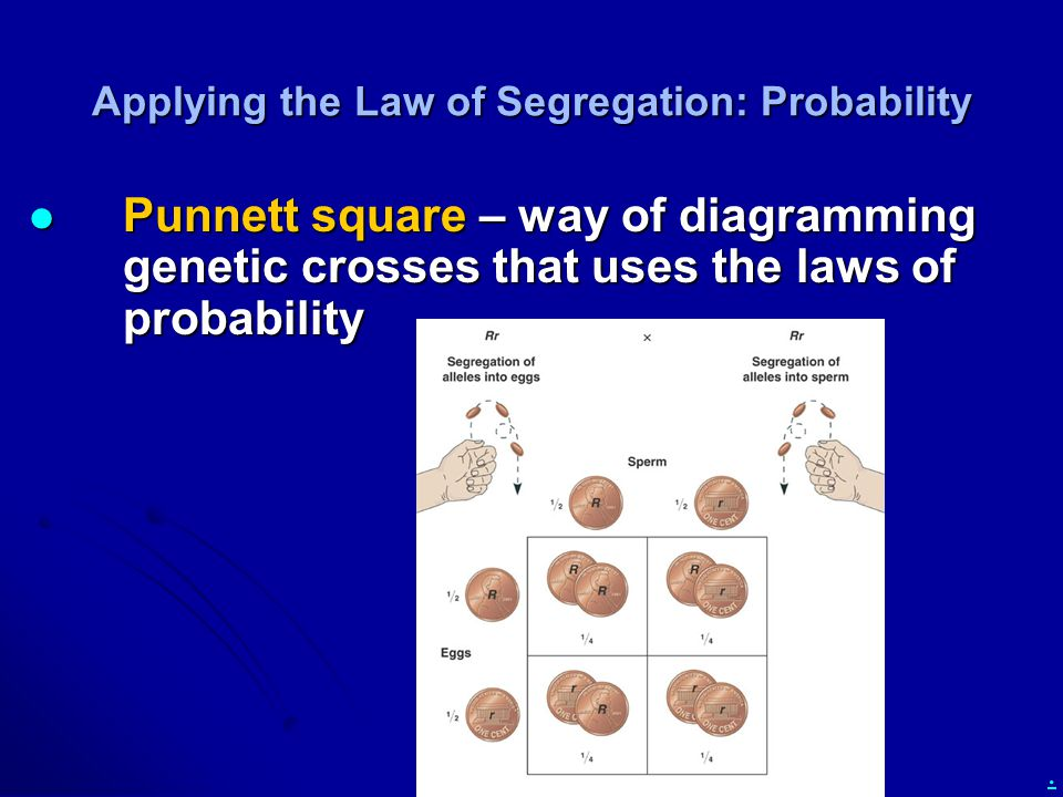 . Applying the Law of Segregation: Probability Punnett square – way of diagramming genetic crosses that uses the laws of probability Punnett square – way of diagramming genetic crosses that uses the laws of probability