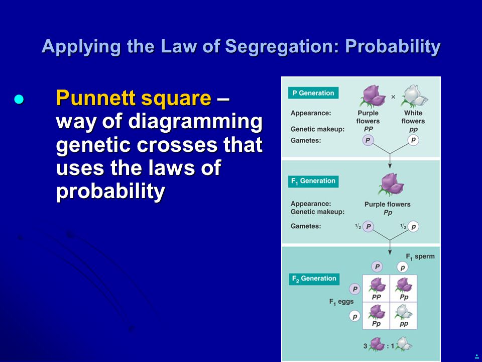 . Applying the Law of Segregation: Probability Punnett square – way of diagramming genetic crosses that uses the laws of probability Punnett square –