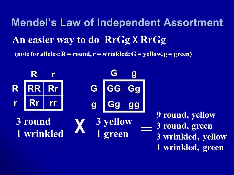 Rr RRRRr rRrrr GgGGGGg gGggg 3 round 1 wrinkled 3 yellow 1 green An easier way to do RrGg x RrGg (note for alleles: R = round, r = wrinkled; G = yello
