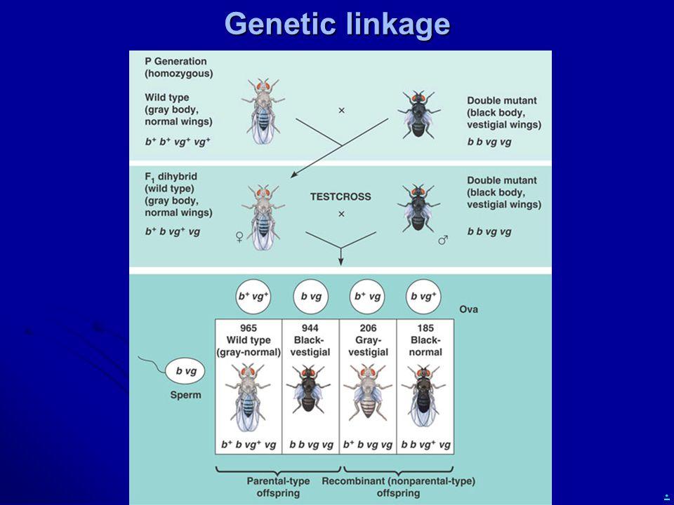. Genetic linkage