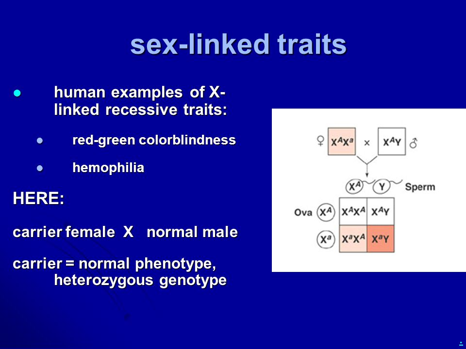 . sex-linked traits human examples of X- linked recessive traits: human examples of X- linked recessive traits: red-green colorblindness red-green colorblindness hemophilia hemophiliaHERE: carrier female X normal male carrier = normal phenotype, heterozygous genotype