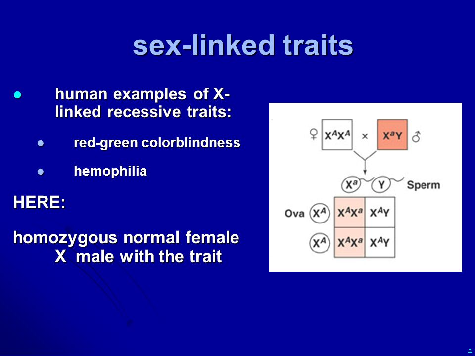 . sex-linked traits human examples of X- linked recessive traits: human examples of X- linked recessive traits: red-green colorblindness red-green colorblindness hemophilia hemophiliaHERE: homozygous normal female X male with the trait