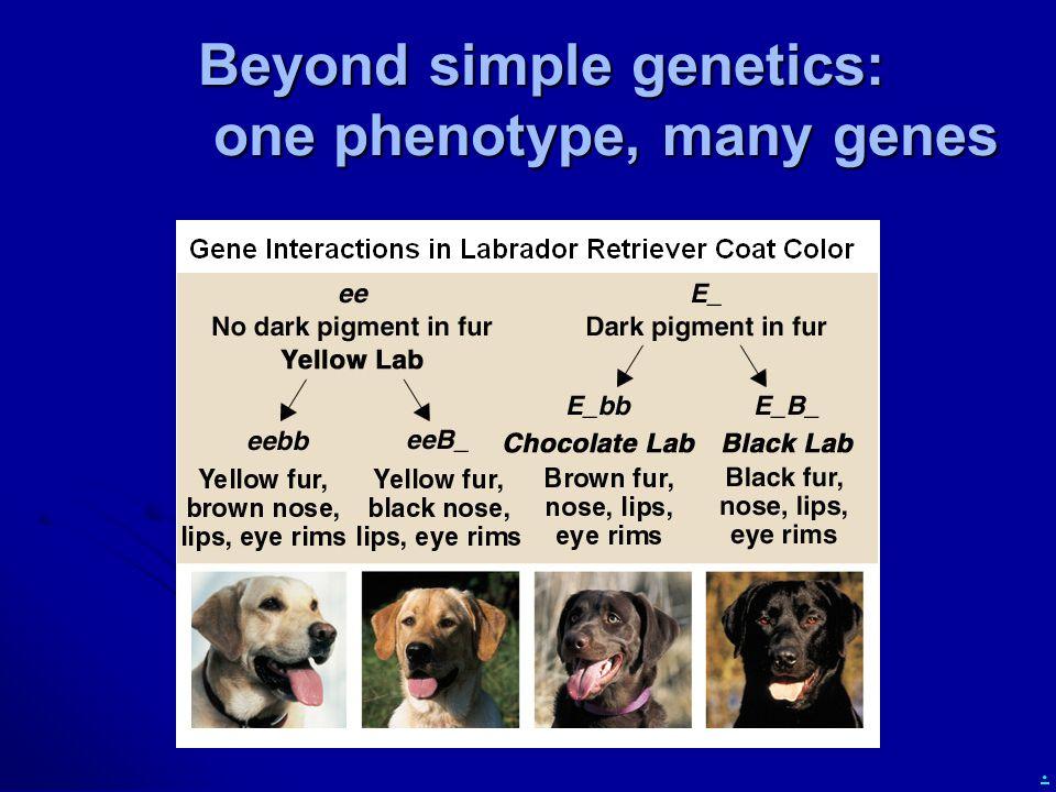 . Beyond simple genetics: one phenotype, many genes