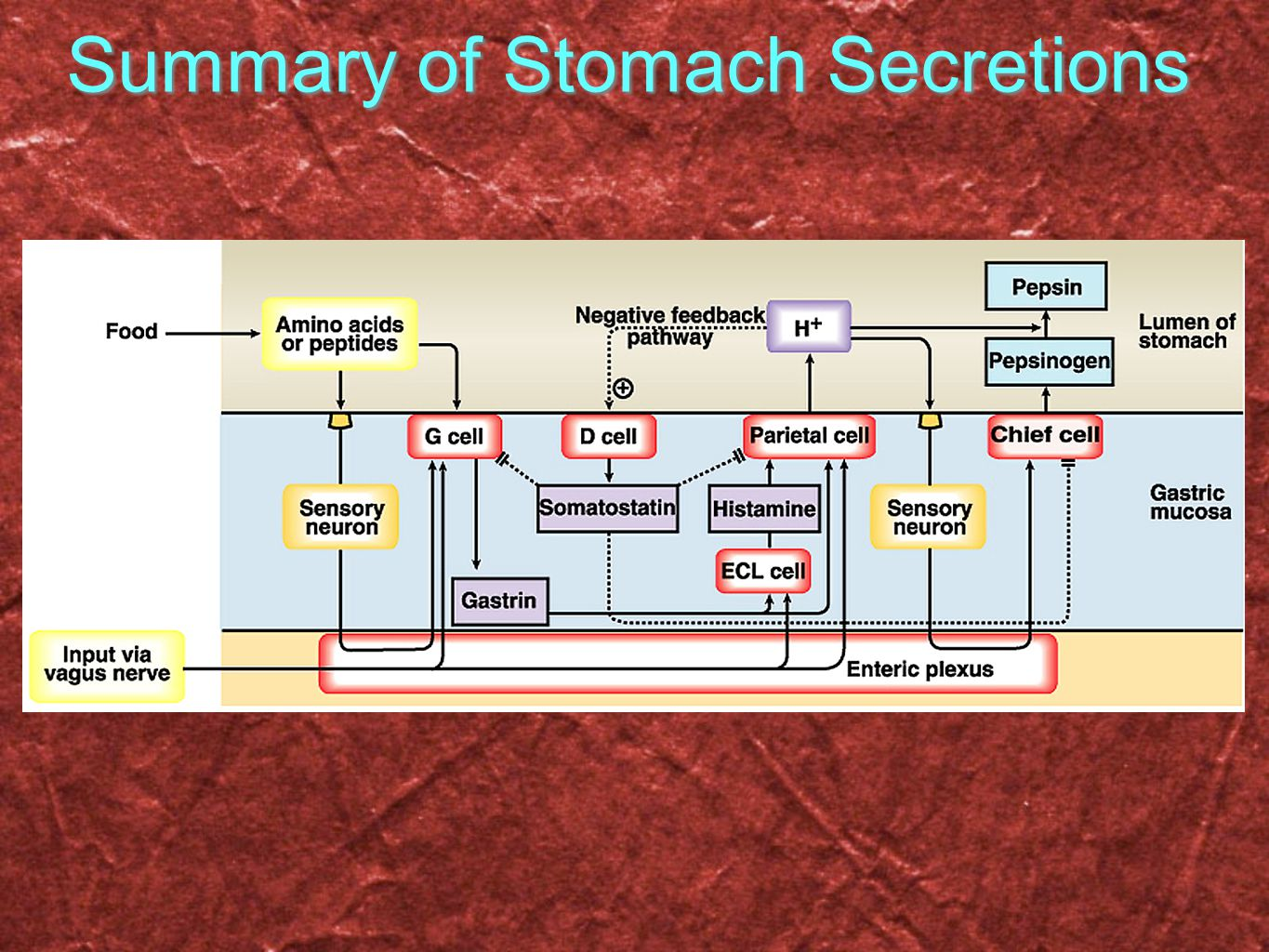 Summary of Stomach Secretions