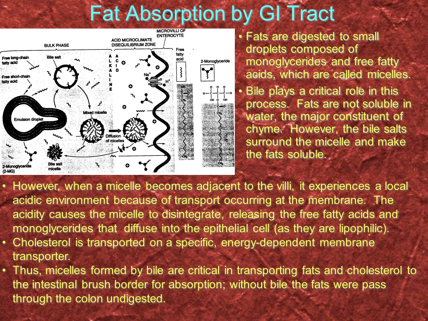 Fat Absorption by GI Tract Fats are digested to small droplets composed of monoglycerides and free fatty acids, which are called micelles.