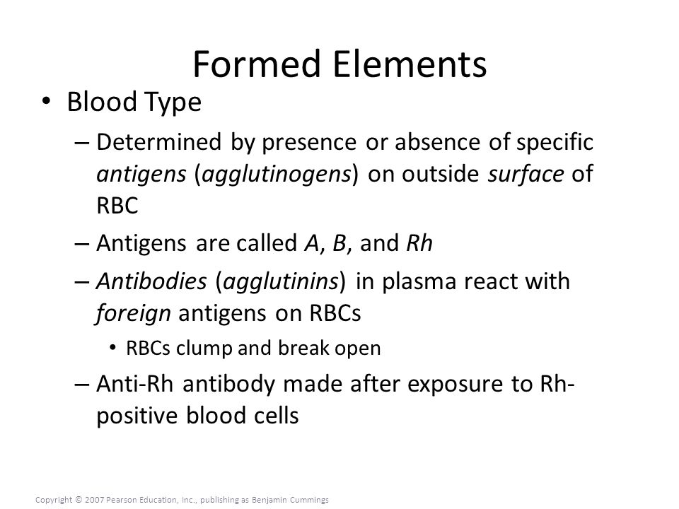 Formed Elements Blood Type – Determined by presence or absence of specific antigens (agglutinogens) on outside surface of RBC – Antigens are called A, B, and Rh – Antibodies (agglutinins) in plasma react with foreign antigens on RBCs RBCs clump and break open – Anti-Rh antibody made after exposure to Rh- positive blood cells Copyright © 2007 Pearson Education, Inc., publishing as Benjamin Cummings