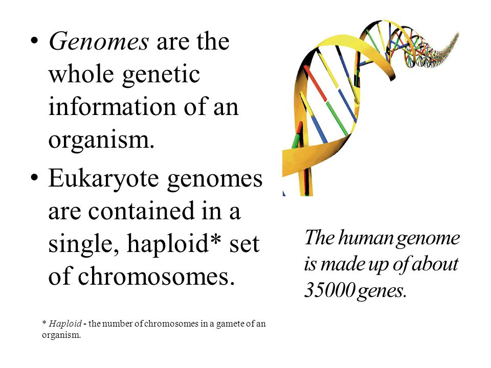Genomes are the whole genetic information of an organism.