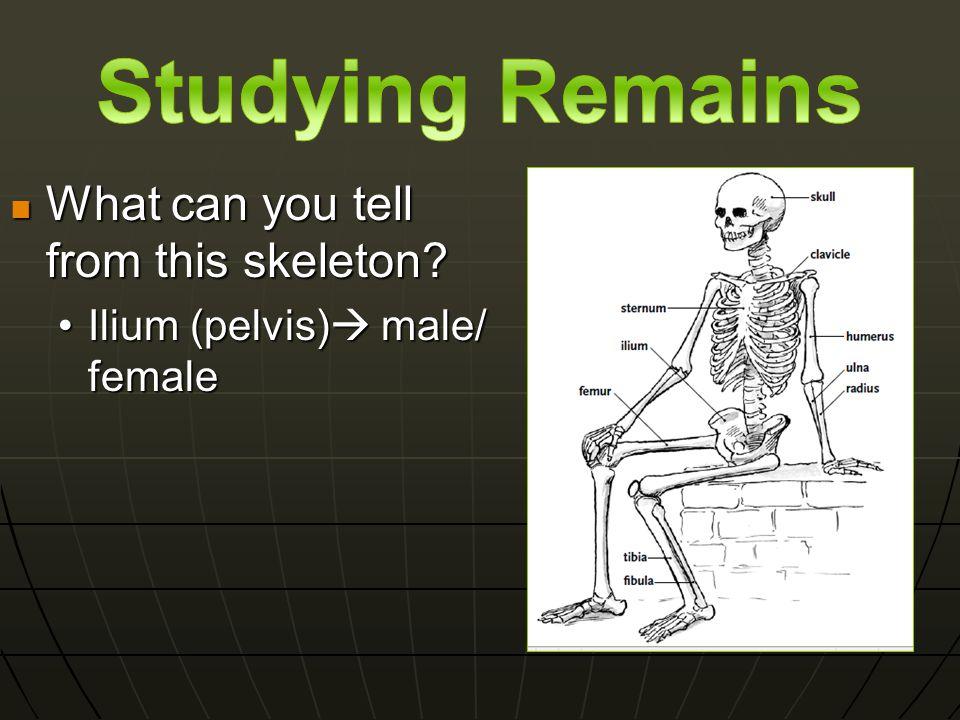 In addition to the Ilium, compare the male ishium to the female ishium.