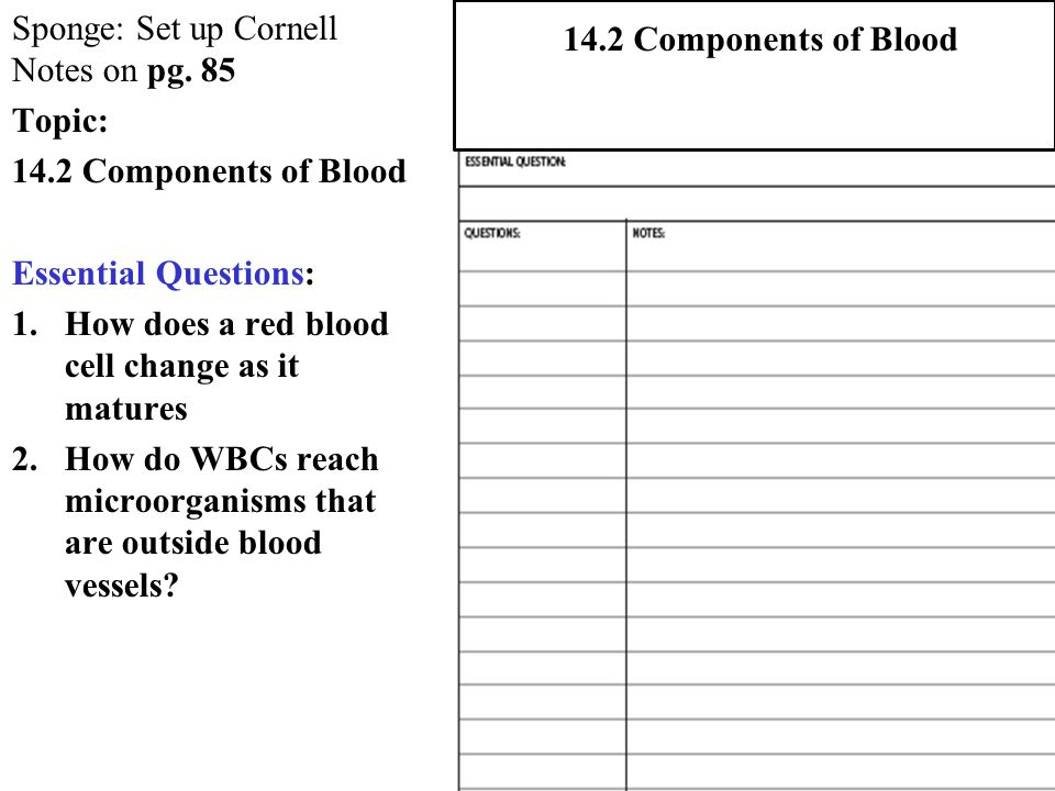 Sponge: Set up Cornell Notes on pg. 85 Topic: 14.2 Components of Blood Essential Questions: 1.How does a red blood cell change as it matures 2.How do