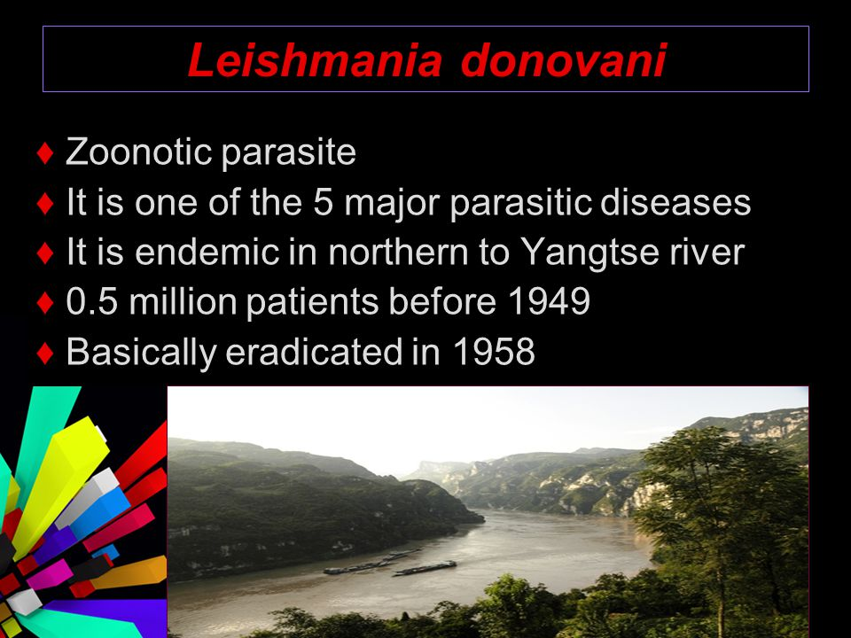 Leishmania donovani ♦ Zoonotic parasite ♦ It is one of the 5 major parasitic diseases ♦ It is endemic in northern to Yangtse river ♦ 0.5 million patie