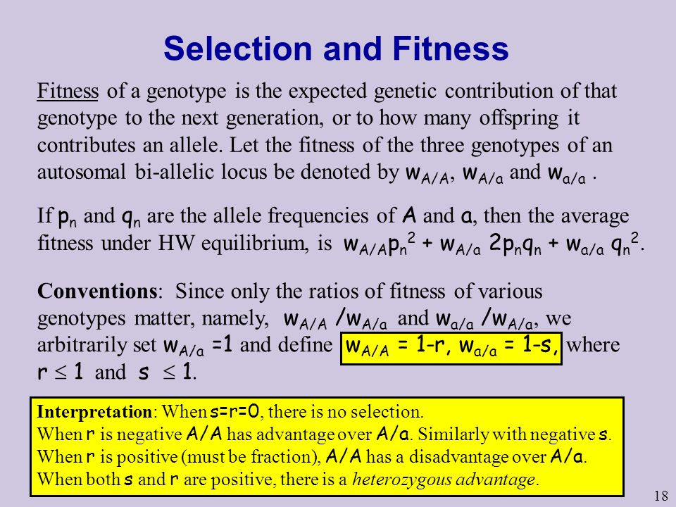 18 Selection and Fitness Fitness of a genotype is the expected genetic contribution of that genotype to the next generation, or to how many offspring it contributes an allele.