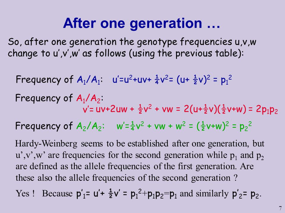 7 After one generation … Frequency of A 1 /A 1 : u'=u 2 +uv+ ¼v 2 = (u+ ½v) 2 = p 1 2 Frequency of A 1 /A 2 : v'= Frequency of A 2 /A 2 : w'=¼v 2 + vw + w 2 = (½v+w) 2 = p 2 2 Hardy-Weinberg seems to be established after one generation, but So, after one generation the genotype frequencies u,v,w change to u',v',w' as follows (using the previous table): u',v',w' are frequencies for the second generation while p 1 and p 2 are defined as the allele frequencies of the first generation.