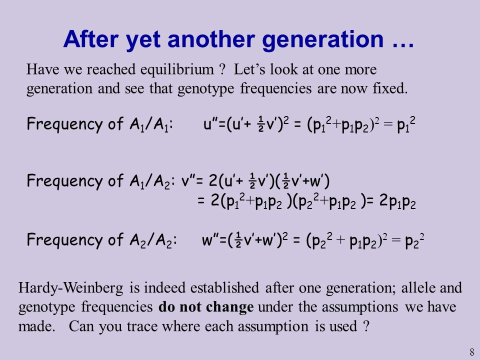8 After yet another generation … Frequency of A 1 /A 1 : u =(u'+ ½v') 2 = (p 1 2 + p 1 p 2 ) 2 = p 1 2 Frequency of A 2 /A 2 : w =(½v'+w') 2 = (p 2 2 + p 1 p 2 ) 2 = p 2 2 Frequency of A 1 /A 2 : v = 2(u'+ ½v')(½v'+w') = 2(p 1 2 + p 1 p 2 )(p 2 2 + p 1 p 2 )= 2p 1 p 2 Hardy-Weinberg is indeed established after one generation; allele and genotype frequencies do not change under the assumptions we have made.