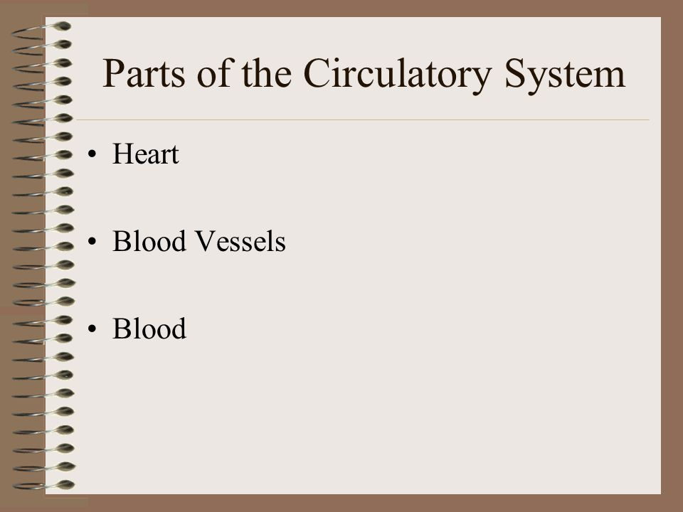 How the Circulatory System works Blood carries substances through Circulatory System Organs serve as transfer stations –Blood picks up nutrients and d