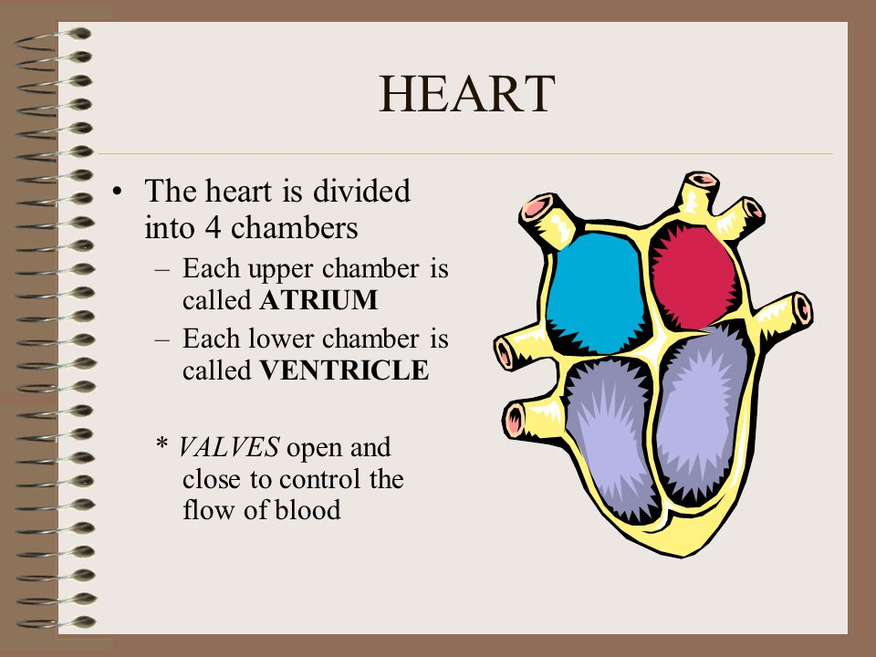 HEART Is a pump, that moves blood in 2 major pathways 1.Pulmonary Circulation 2.Systematic Circulation