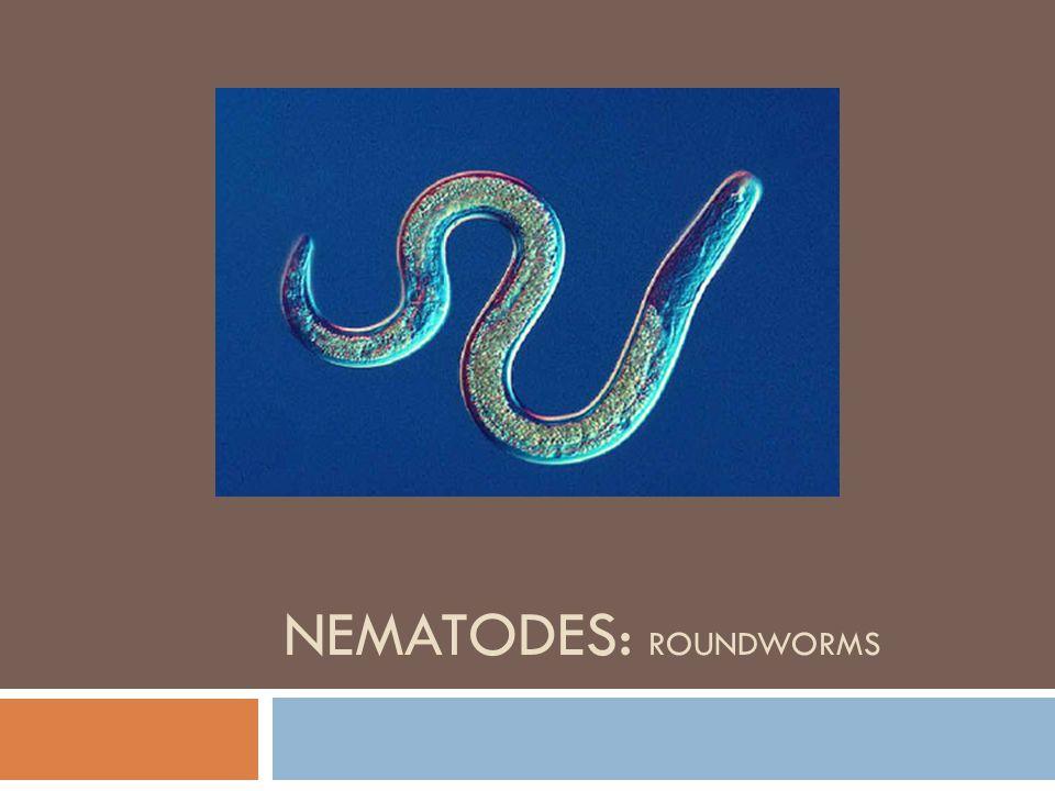 NEMATODES: ROUNDWORMS