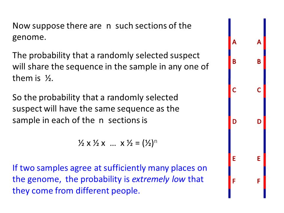 Now suppose there are n such sections of the genome. So the probability that a randomly selected suspect will have the same sequence as the sample in