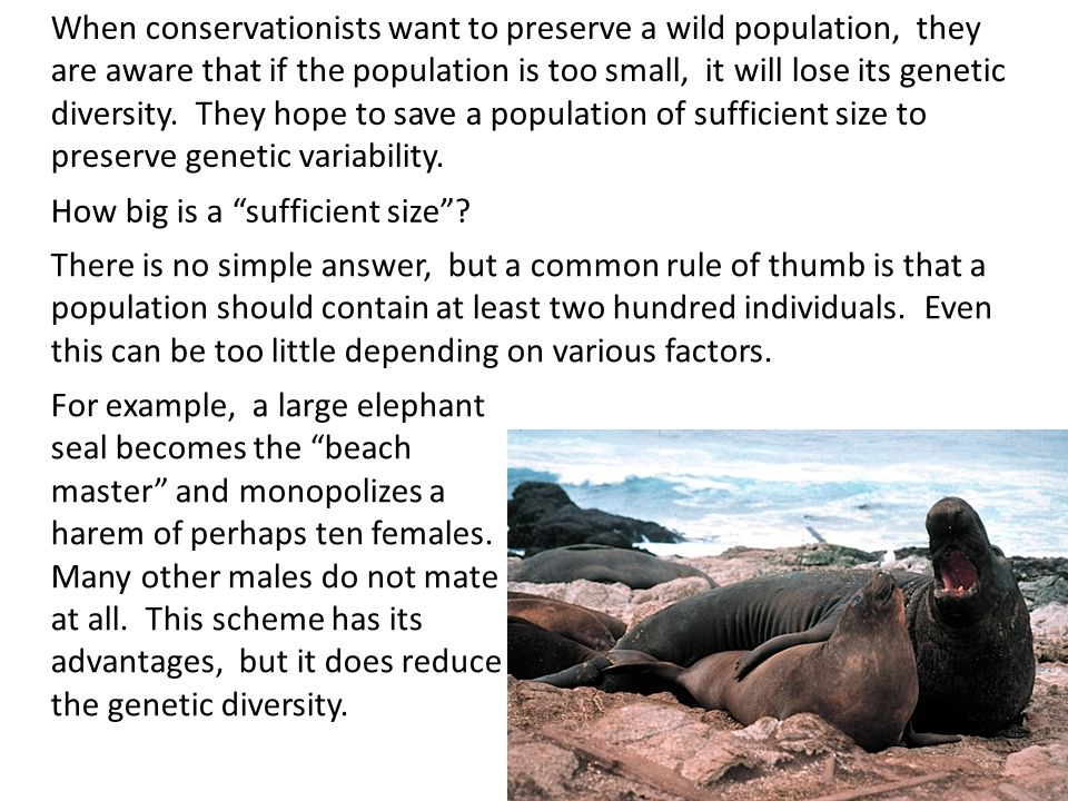 When conservationists want to preserve a wild population, they are aware that if the population is too small, it will lose its genetic diversity. They