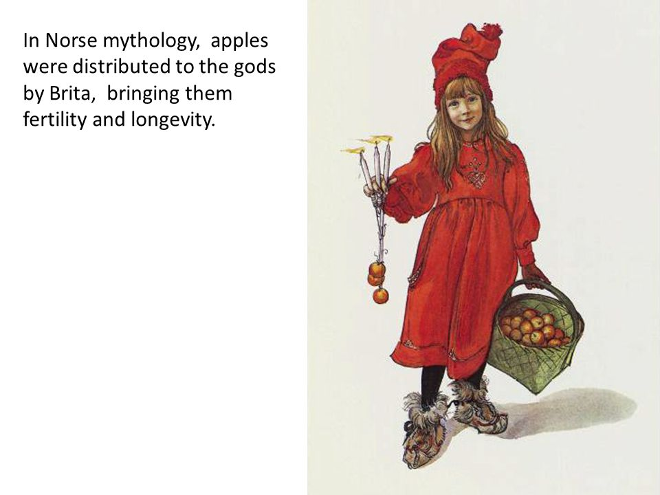 In Norse mythology, apples were distributed to the gods by Brita, bringing them fertility and longevity.