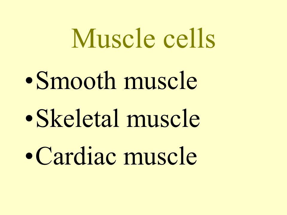 Muscle cells Smooth muscle Skeletal muscle Cardiac muscle