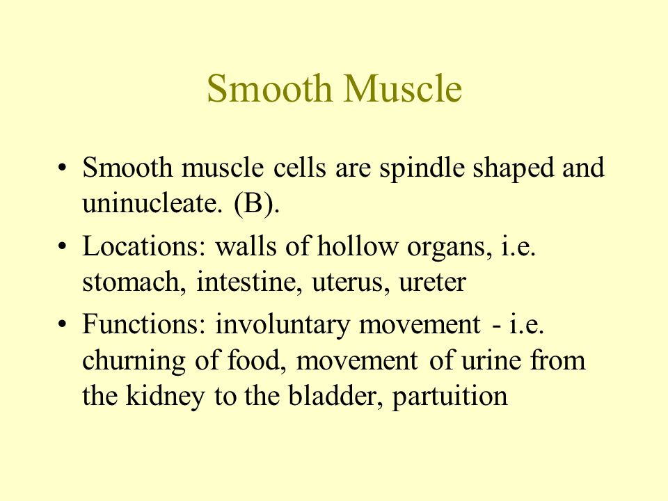 Smooth Muscle Smooth muscle cells are spindle shaped and uninucleate.