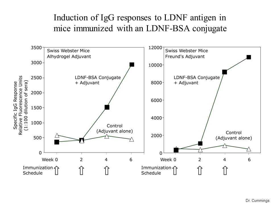 Induction of IgG responses to LDNF antigen in mice immunized with an LDNF-BSA conjugate Dr.