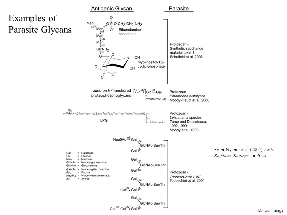 Examples of Parasite Glycans Dr. Cummings From Nyame et al (2004) Arch. Biochem. Biophys. In Press