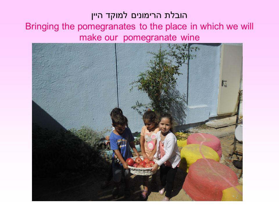 הובלת הרימונים למוקד היין Bringing the pomegranates to the place in which we will make our pomegranate wine