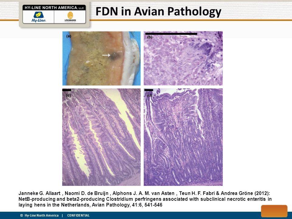 FDN in Avian Pathology Janneke G. Allaart, Naomi D. de Bruijn, Alphons J. A. M. van Asten, Teun H. F. Fabri & Andrea Gröne (2012): NetB-producing and