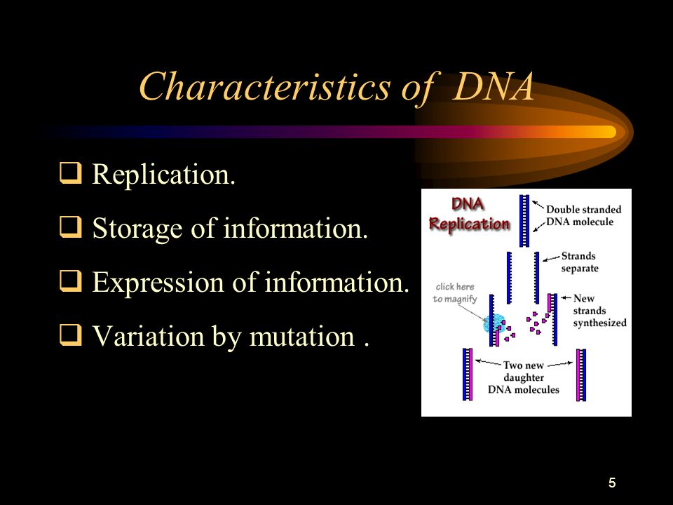 5 Characteristics of DNA  Replication.  Storage of information.  Expression of information.  Variation by mutation.