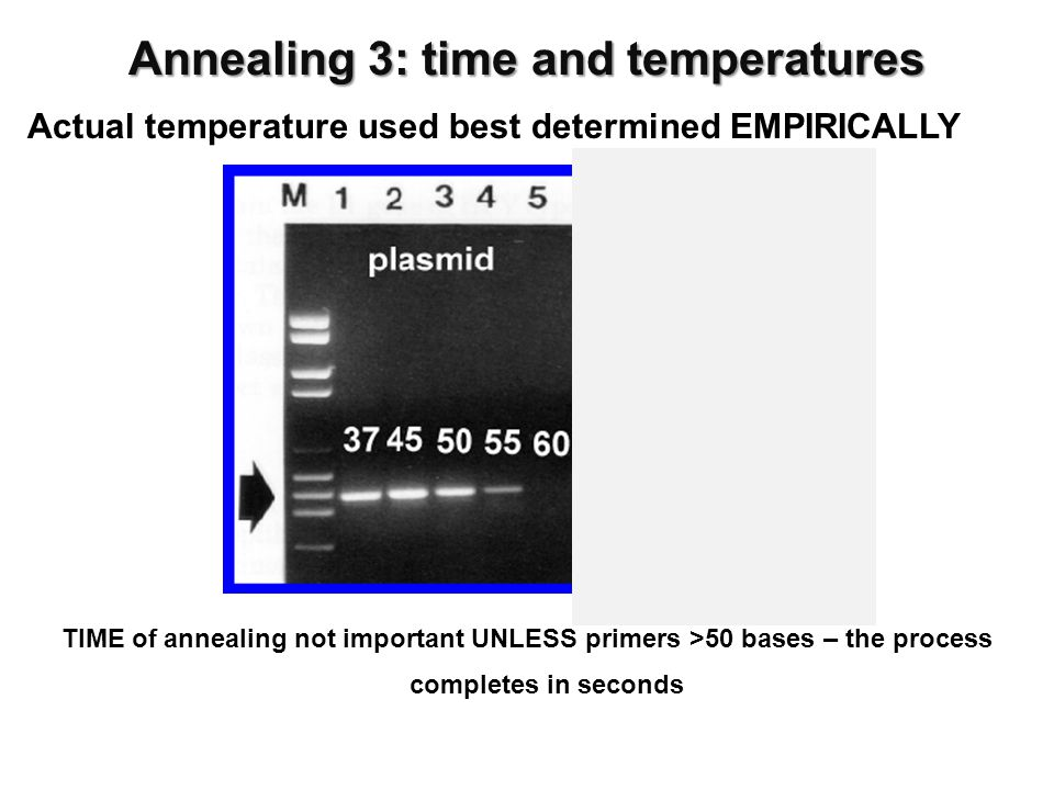 Actual temperature used best determined EMPIRICALLY Annealing 3: time and temperatures TIME of annealing not important UNLESS primers >50 bases – the process completes in seconds