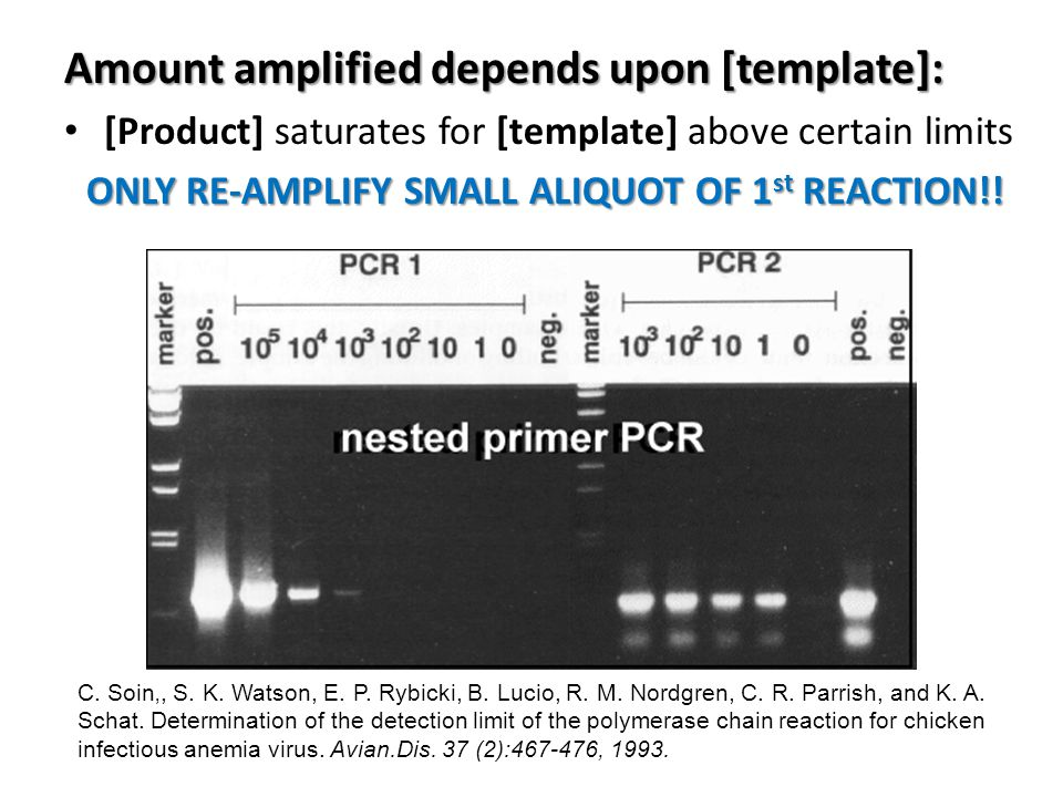 Amount amplified depends upon [template]: [Product] saturates for [template] above certain limits ONLY RE-AMPLIFY SMALL ALIQUOT OF 1 st REACTION!.