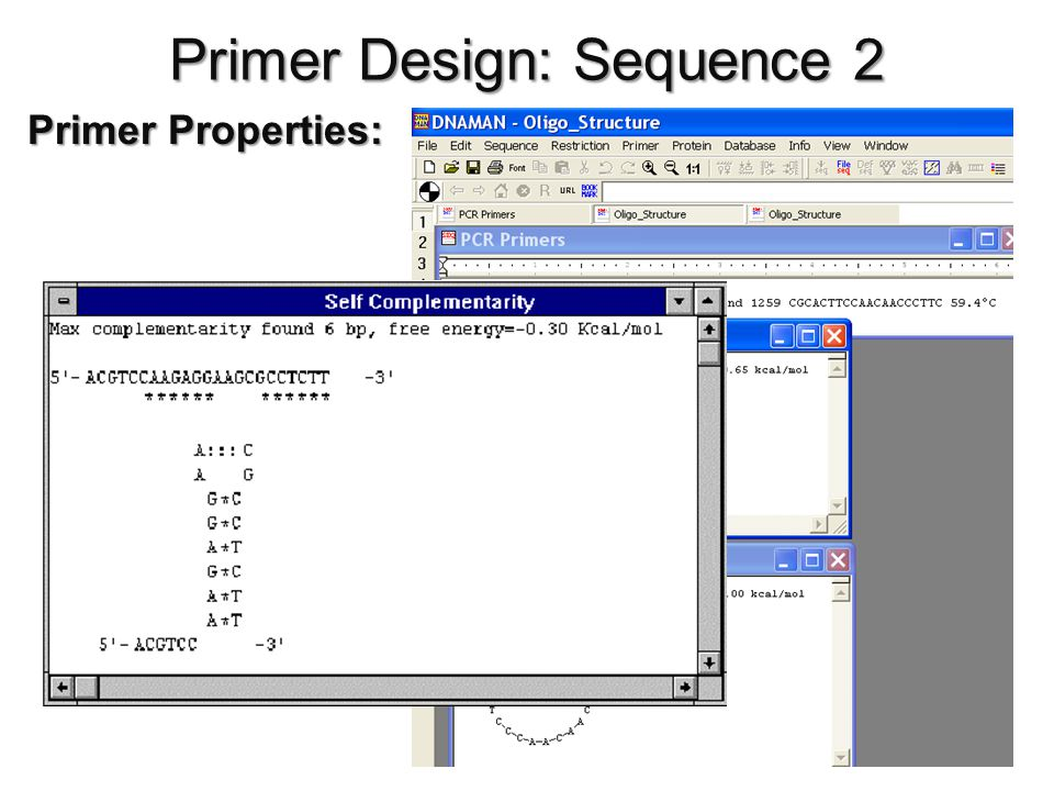 Primer Design: Sequence 2 Primer Properties: