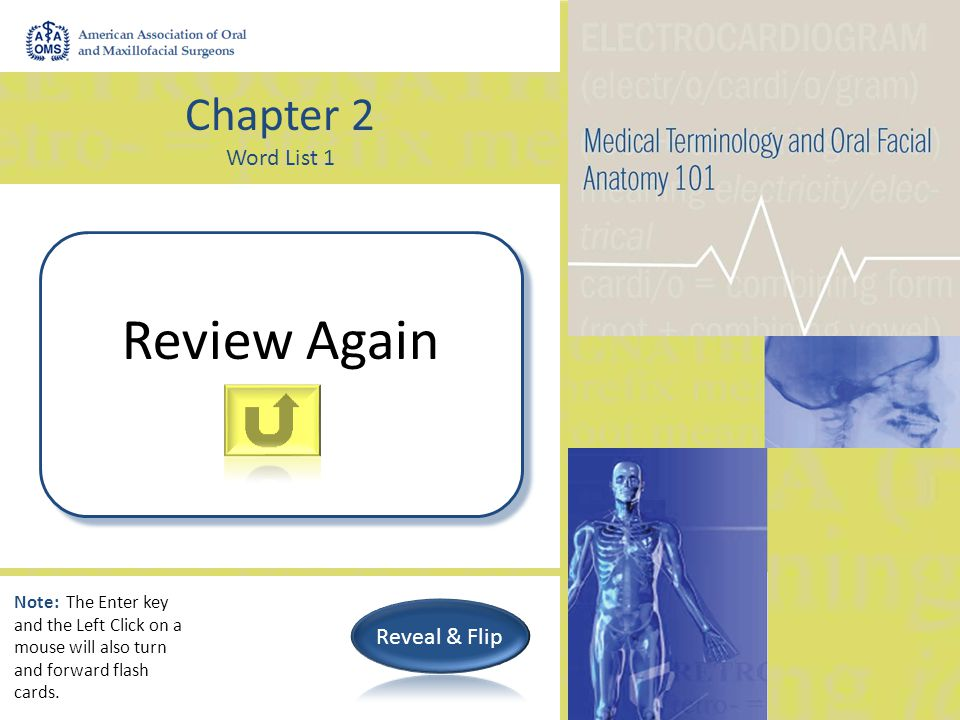 Chapter 2 Word List 1 Pertaining to the peritoneum (abdominal wall) peritoneal Note: The Enter key and the Left Click on a mouse will also turn and forward flash cards.