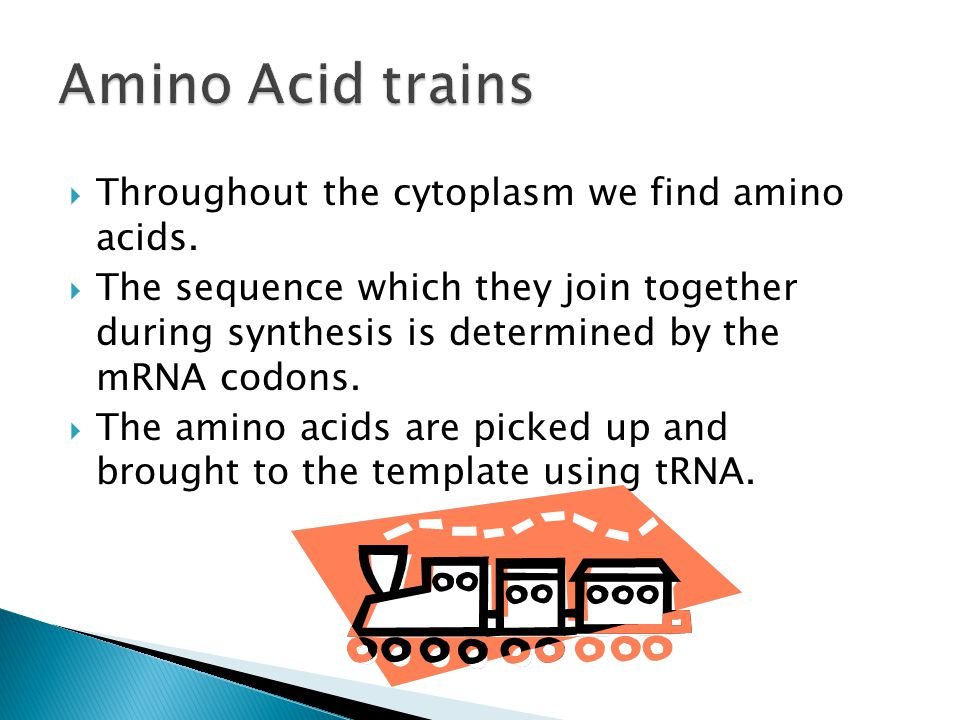  Throughout the cytoplasm we find amino acids.