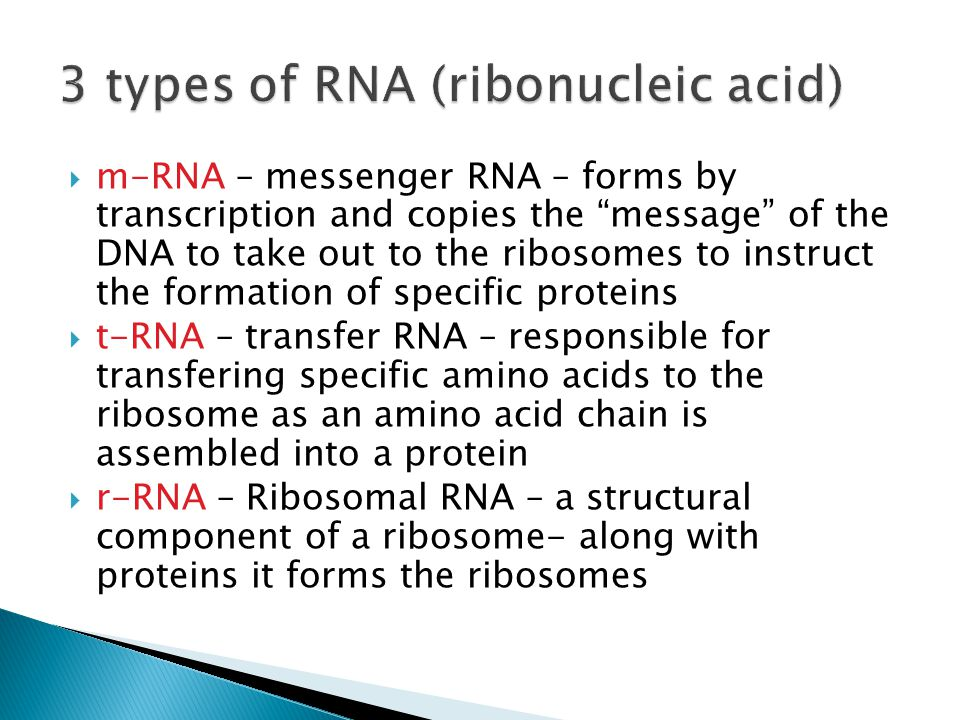  m-RNA – messenger RNA – forms by transcription and copies the message of the DNA to take out to the ribosomes to instruct the formation of specific proteins  t-RNA – transfer RNA – responsible for transfering specific amino acids to the ribosome as an amino acid chain is assembled into a protein  r-RNA – Ribosomal RNA – a structural component of a ribosome- along with proteins it forms the ribosomes