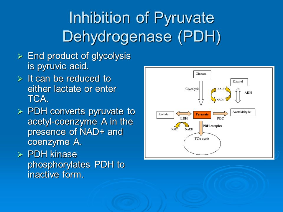 Inhibition of Pyruvate Dehydrogenase (PDH)  End product of glycolysis is pyruvic acid.  It can be reduced to either lactate or enter TCA.  PDH conv