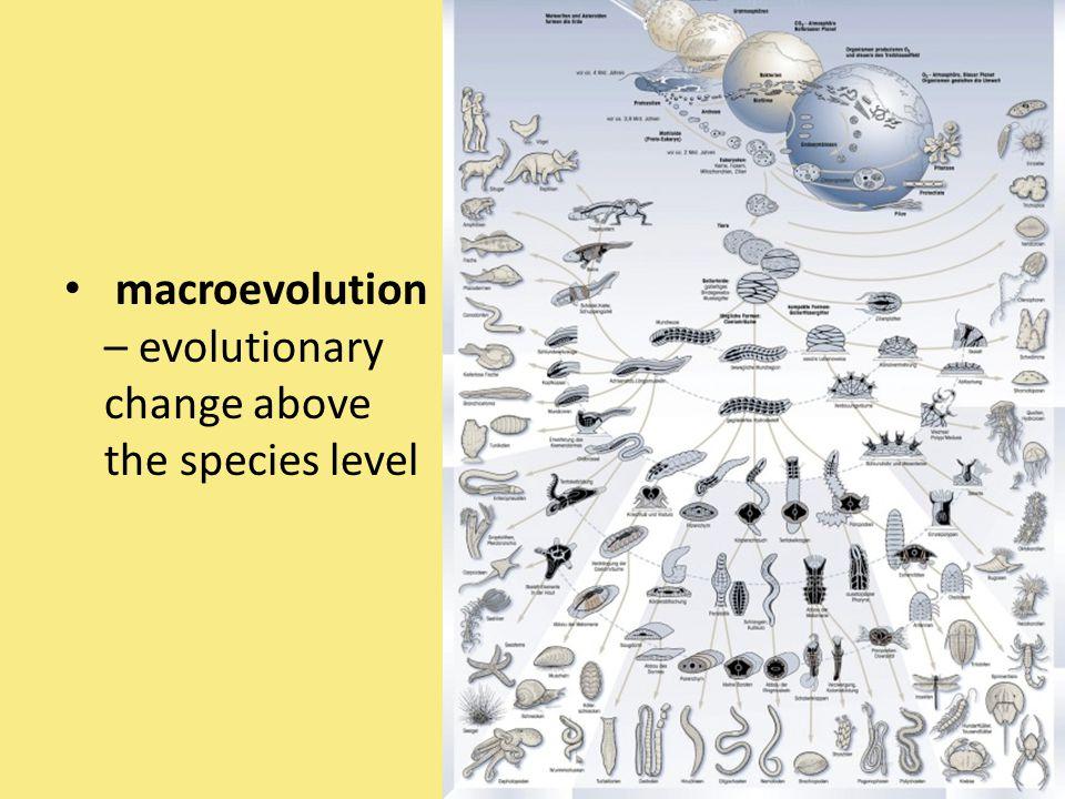 Heterozygous Advantage – when individuals heterozygous Recessive allele is maintained in the population