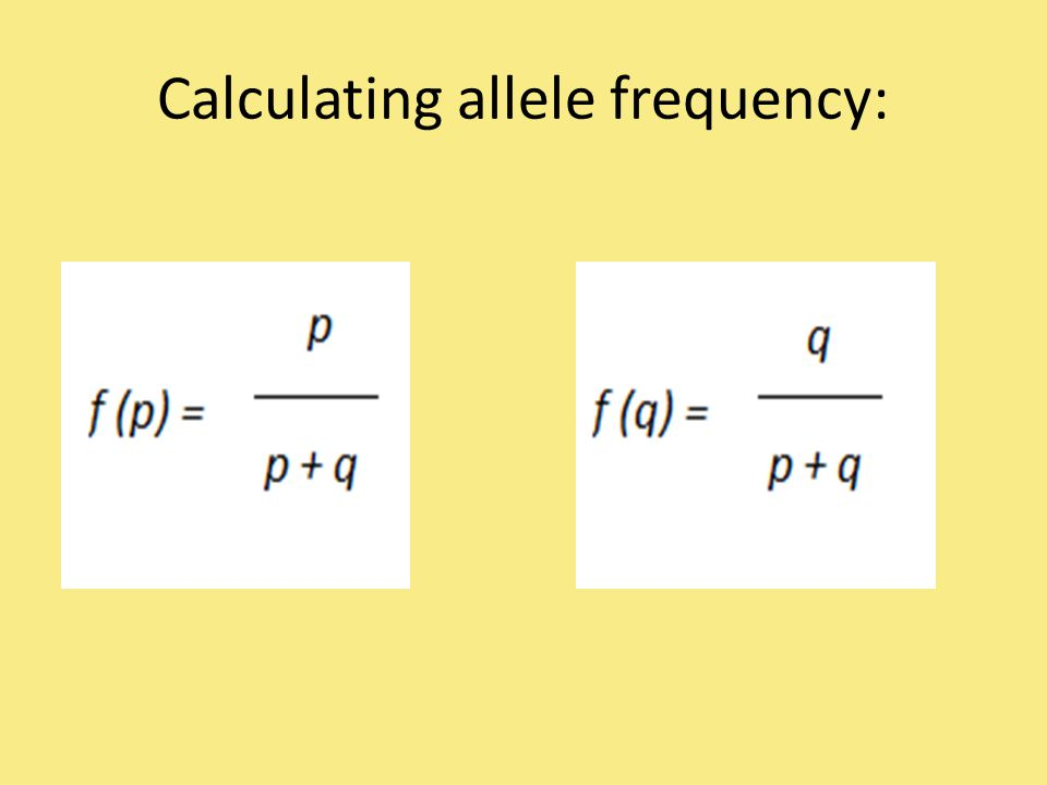 Calculating allele frequency:
