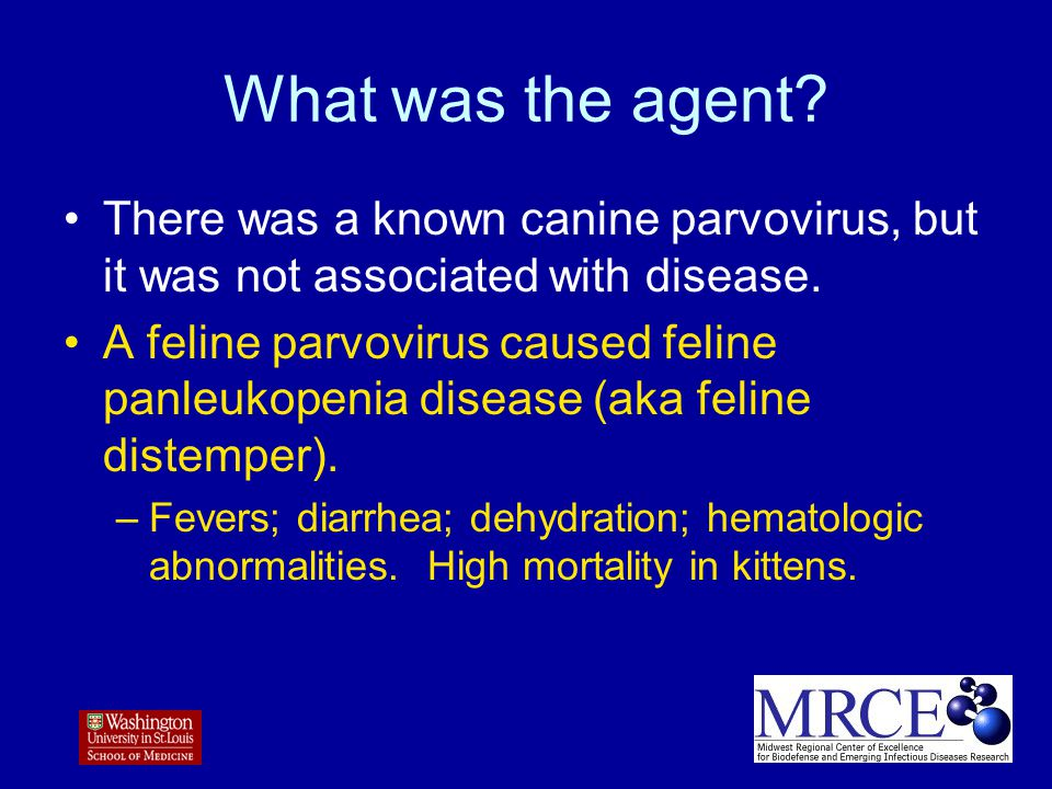 What was the agent.There was a known canine parvovirus, but it was not associated with disease.
