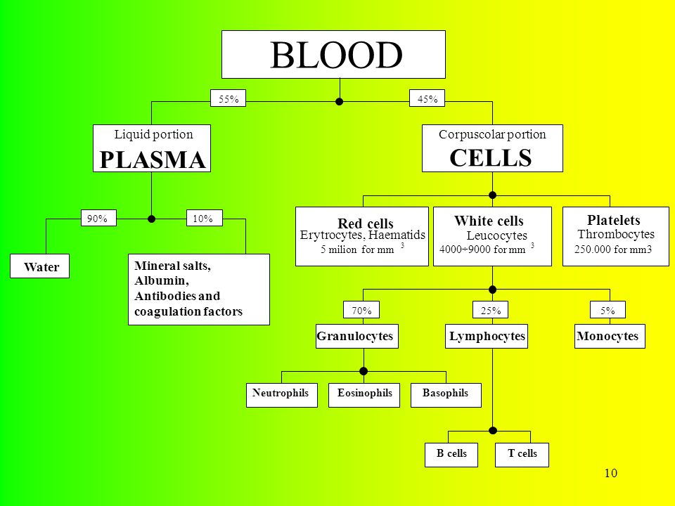 10 BLOOD Liquid portion PLASMA Corpuscolar portion CELLS 55%45% Water Mineral salts, Albumin, Antibodies and coagulation factors 90%10% Red cells Erytrocytes, Haematids 5 milion for mm 3 White cells Leucocytes 4000÷9000 for mm 3 Platelets Thrombocytes 250.000 for mm3 GranulocytesLymphocytesMonocytes NeutrophilsEosinophilsBasophils B cellsT cells 70%5%25%