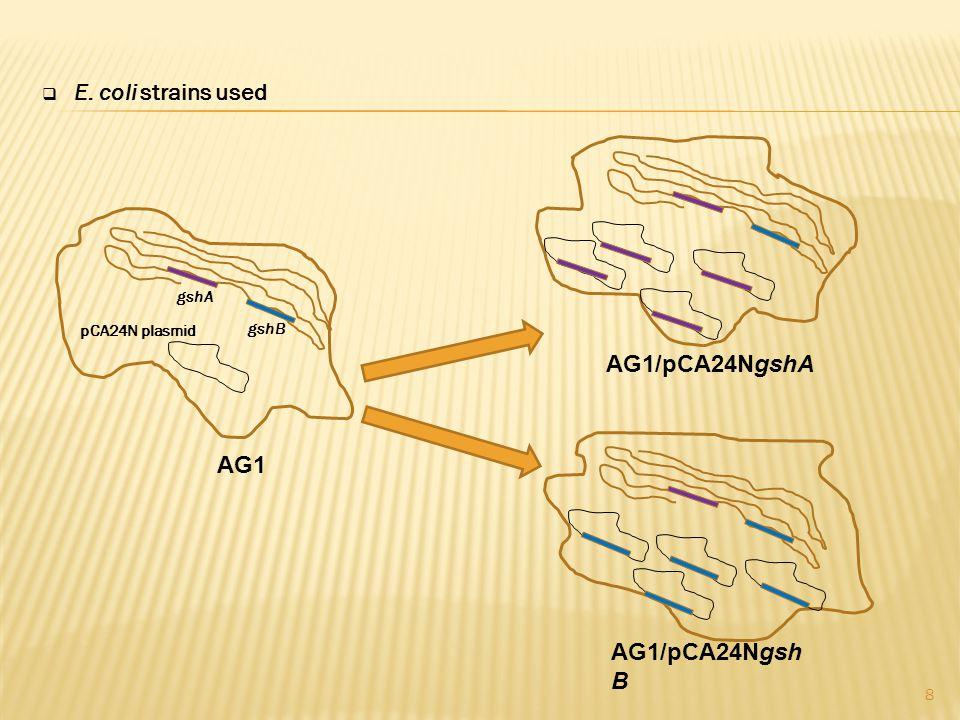  E. coli strains used 8 gshB pCA24N plasmid gshA AG1 AG1/pCA24NgshA AG1/pCA24Ngsh B