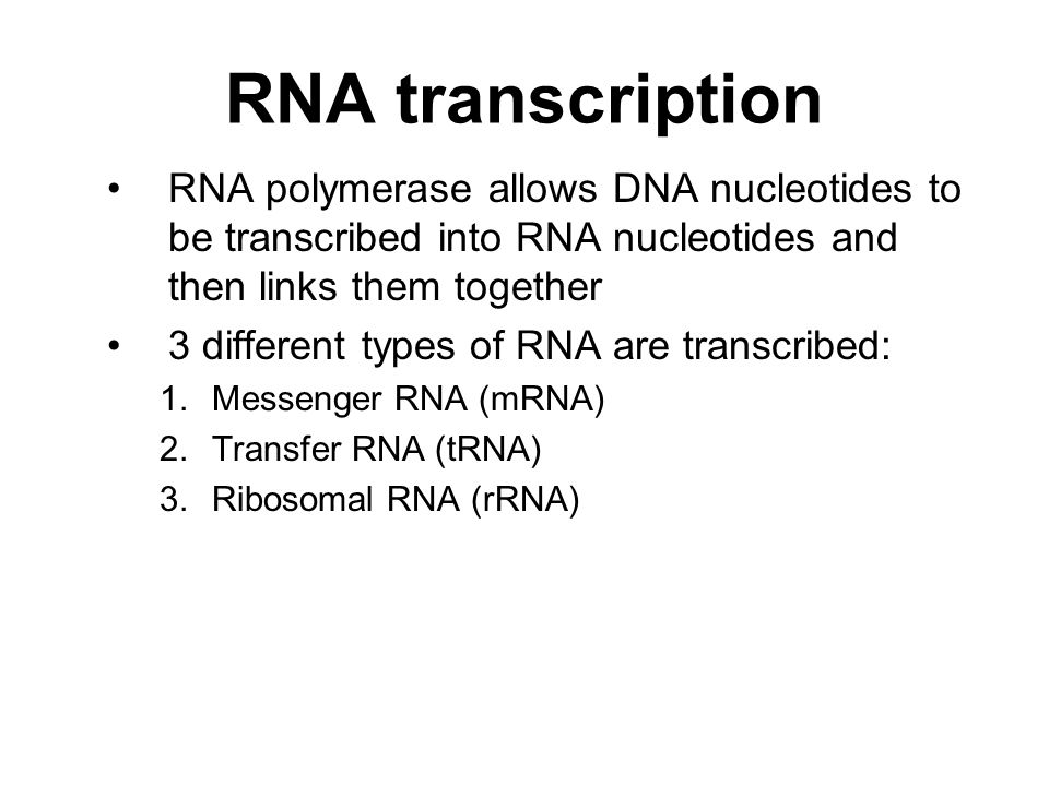 RNA transcription RNA polymerase allows DNA nucleotides to be transcribed into RNA nucleotides and then links them together 3 different types of RNA are transcribed: 1.Messenger RNA (mRNA) 2.Transfer RNA (tRNA) 3.Ribosomal RNA (rRNA)