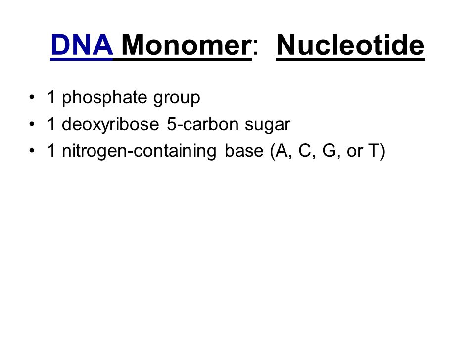 DNA Monomer: Nucleotide 1 phosphate group 1 deoxyribose 5-carbon sugar 1 nitrogen-containing base (A, C, G, or T)