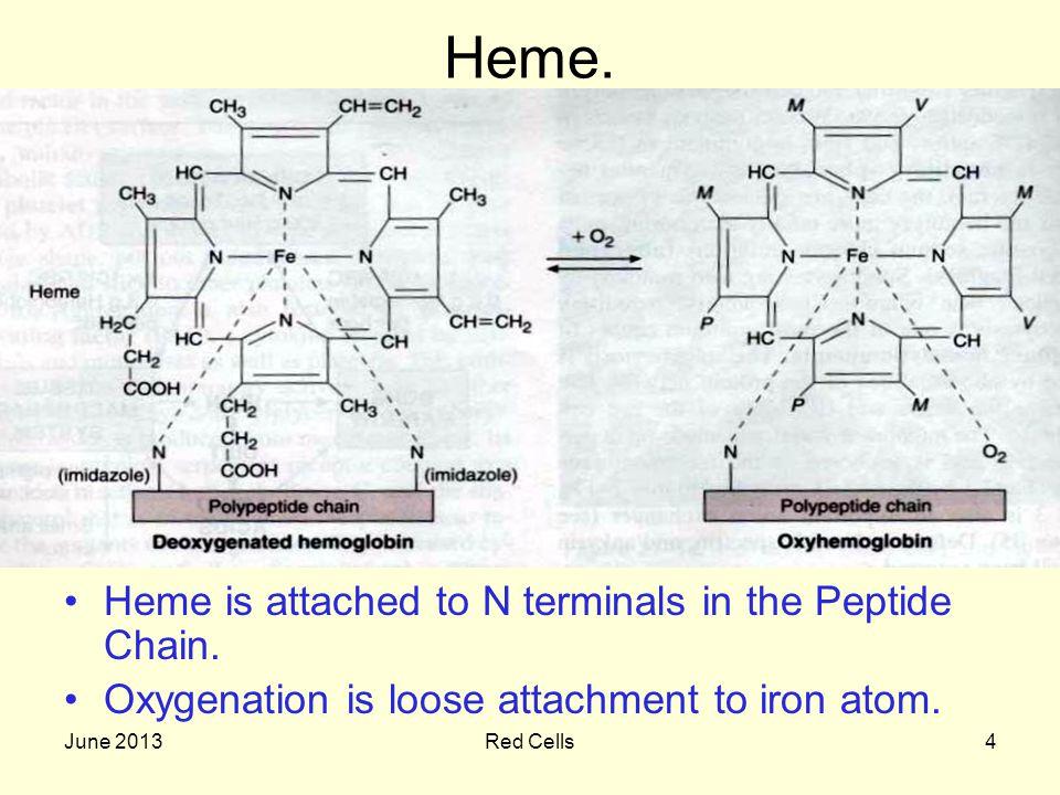 June 2013Red Cells5 Reaction of Heamoglobin.1 gram of hemoglobin binds to 1.34 ml of oxygen.