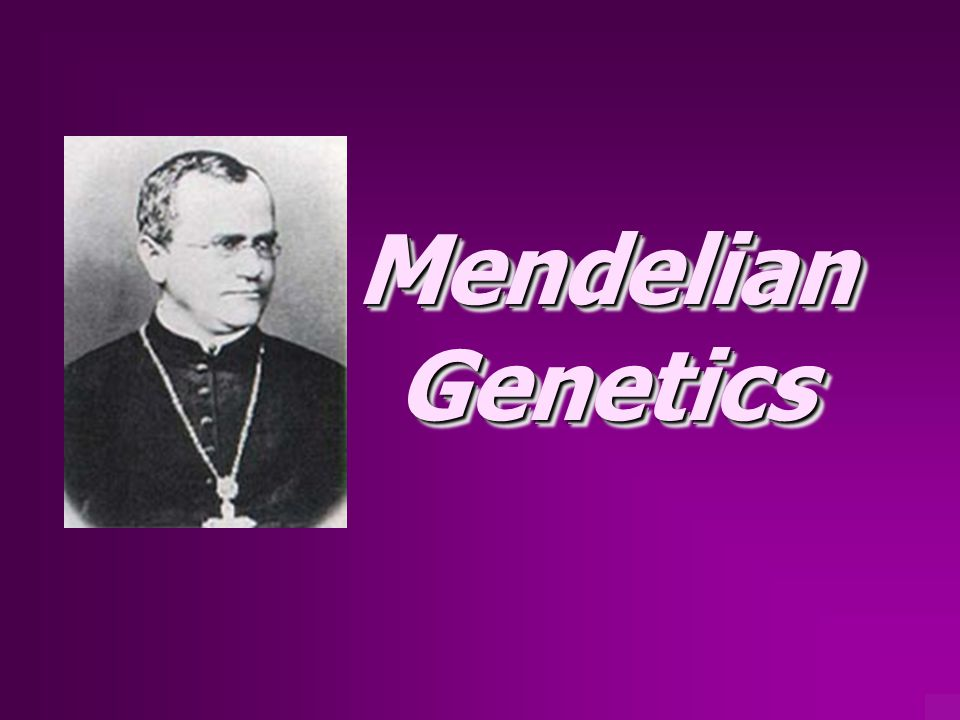 Gregor Mendel… Father of Genetics  Augustinian monk  worked with garden peas  studied pea's characteristics  formulated 2 basic laws of genetics governing nature of inheritance  50 yrs before we knew of chromosomes; 100 yrs before genes and DNA