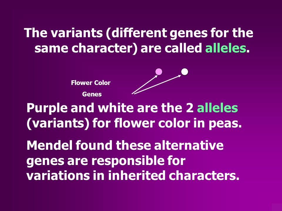 Some alleles always show themselves…they are said to be Dominant Alleles Other alleles only show themselves if they are found in pairs…they are Recessive Alleles This is called the PRINCIPLE OF DOMINANCE