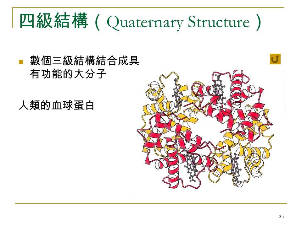 35 四級結構( Quaternary Structure ) 數個三級結構結合成具 有功能的大分子 人類的血球蛋白